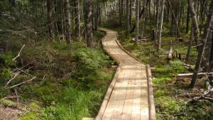Nine Mile River Trail