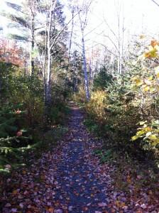 Milford Rec Trail