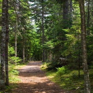 uniacke-estate-trail